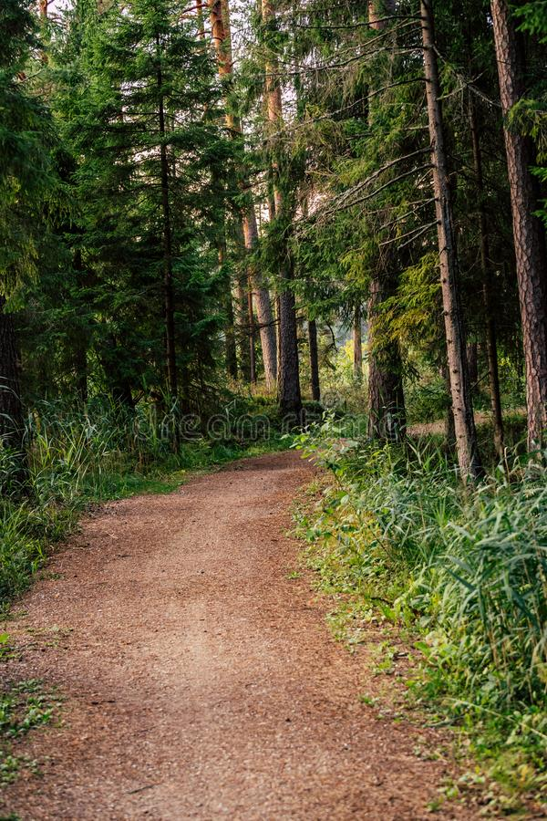 Tourist Hike trail in the Magical Moody Woods on Sunny Summer Day - Concept of the Harmony and Travel. In the Countryside stock photography