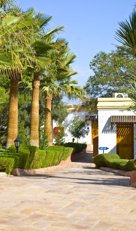 Tourist hotel and palm trees