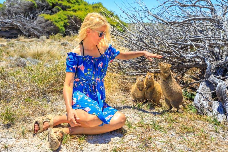 Tourist mit drei Quokka stockbilder