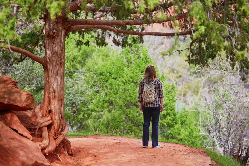 Tourist in Nationalpark Zion, USA lizenzfreies stockbild
