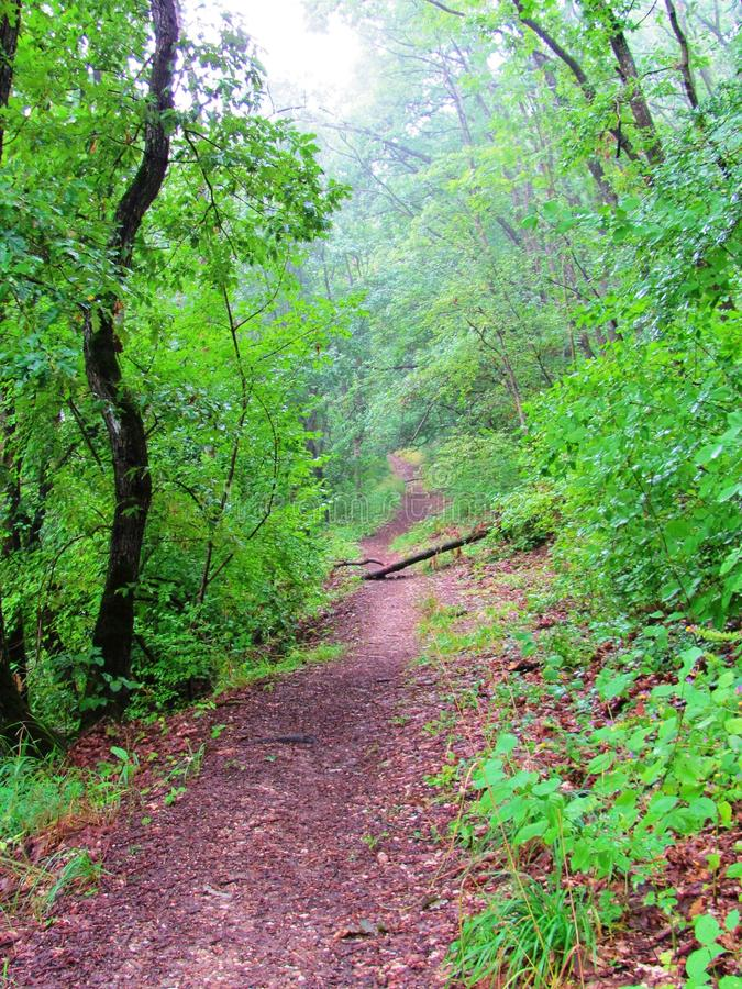 Tourist path in the green forest in Turda, Transsylvania, Romania.  royalty free stock photography