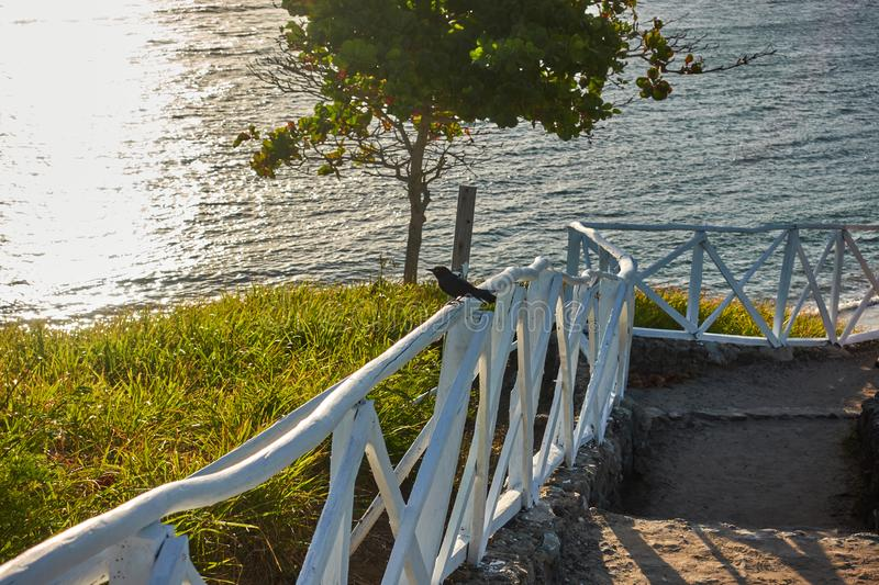 Tourist path with steps, white fence and a bird on the ocean.  royalty free stock photo