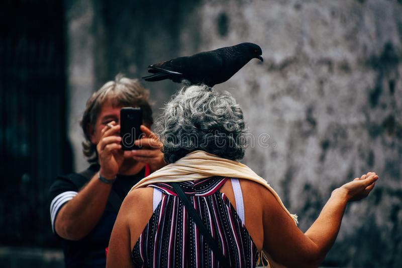 A tourist with a pigeon posses for the camera in Havana, Cuba. A tourist with a pigeon on her head posses for the camera in Havana, Cuba royalty free stock photos