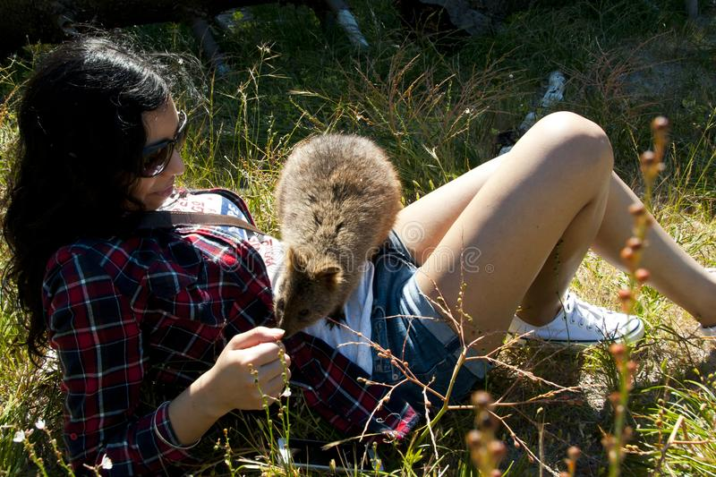 Tourist with Quokka stock images