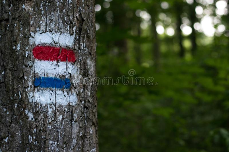 Tourist sign on a tree. A tree marked with a tourist sign stock photos