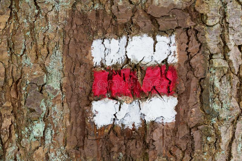 Tourist sign on the tree. For a tourist trip stock images
