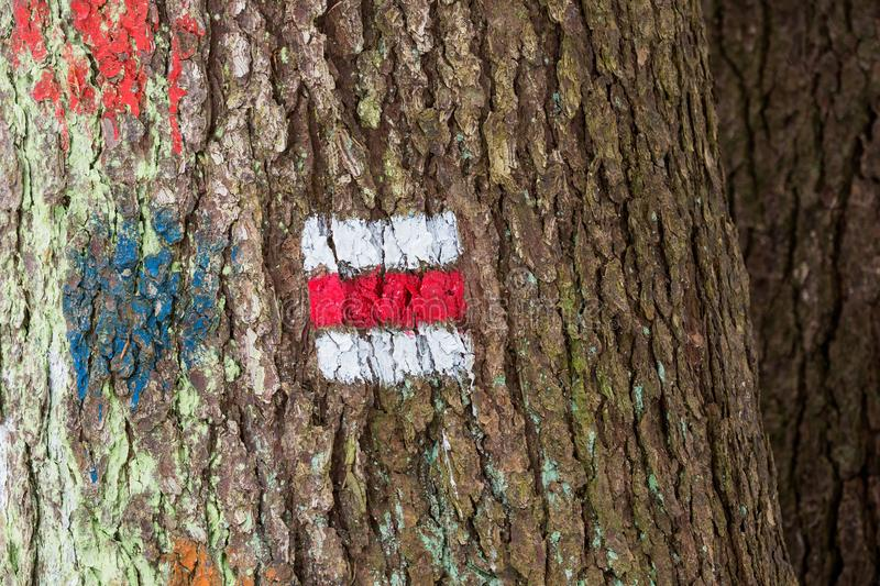 Tourist sign on the tree. For a tourist trip stock photography