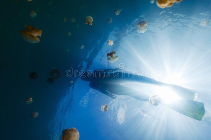 Tourist snorkeling in Jellyfish Lake stock photos