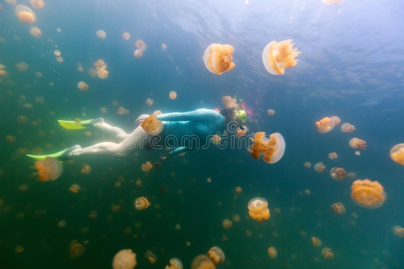 Tourist snorkeling in Jellyfish Lake. Underwater photo of tourist woman snorkeling with endemic golden jellyfish in lake at Palau. Snorkeling in Jellyfish Lake stock photo