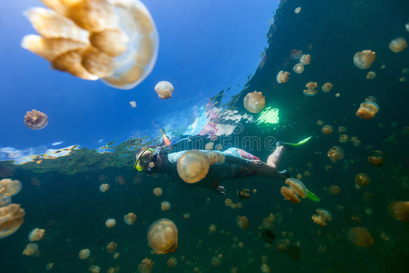 Tourist snorkeling in Jellyfish Lake royalty free stock images