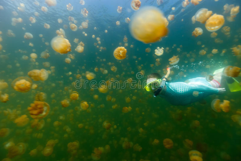 Tourist snorkeling in Jellyfish Lake stock image