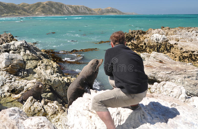 Download Tourist Taking Photo Of A Young Curious Seal Stock Image - Image: 22741781