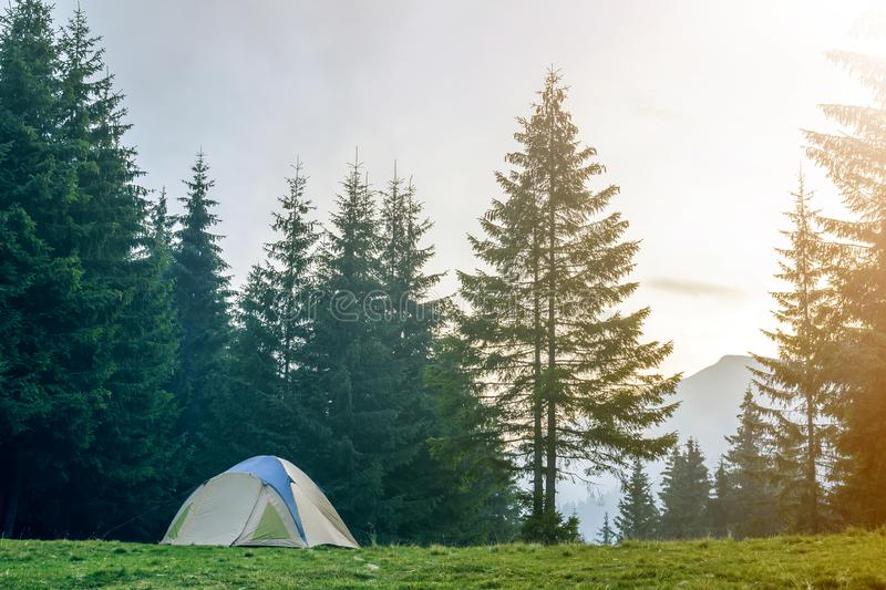 Tourist tent on grassy valley among tall green spruce trees on distant misty blue mountain and clear sky at sunrise background. royalty free stock photography