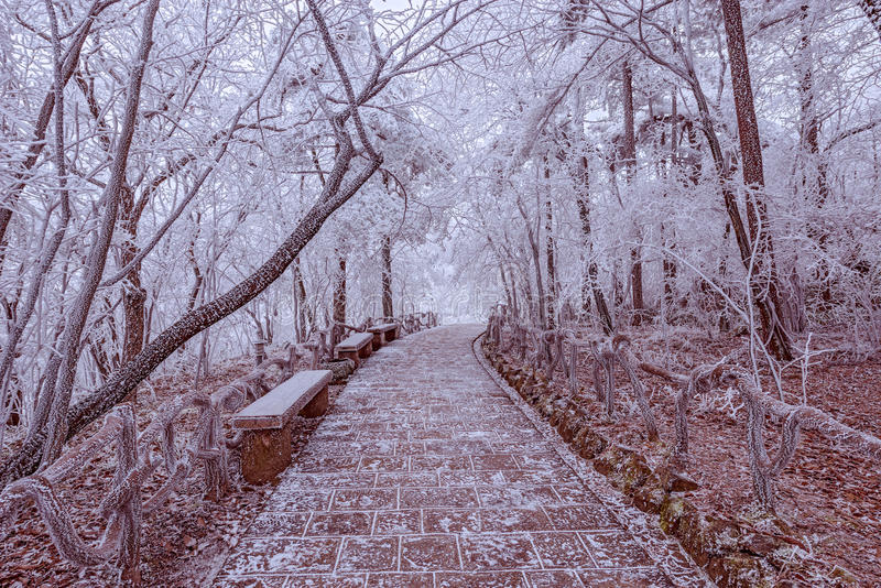 Tourist trail in Huangshan National park. stock photography