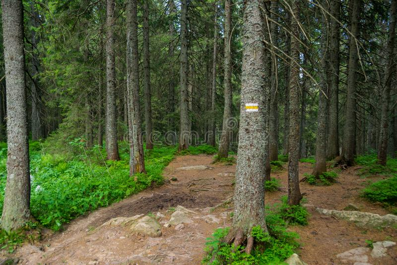 Tourist trail with sign in forest. Tourist trail with white and yellow sign on a tree trunk in dense forest of Carpathian National Nature Park, Ukraine royalty free stock photo