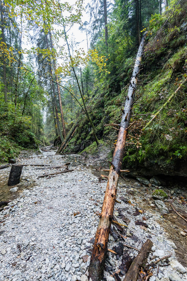 Tourist trail in woods. Tourist trail in misty woods with boardwalks and rocks for climbing stock photo