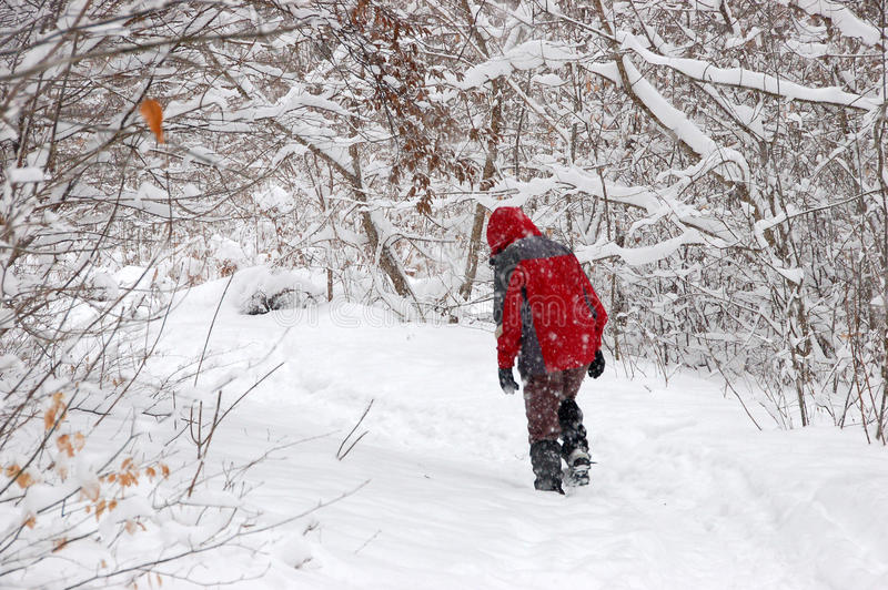 Download Tourist Walking Alone In Winter Forest Stock Photo - Image: 12823300