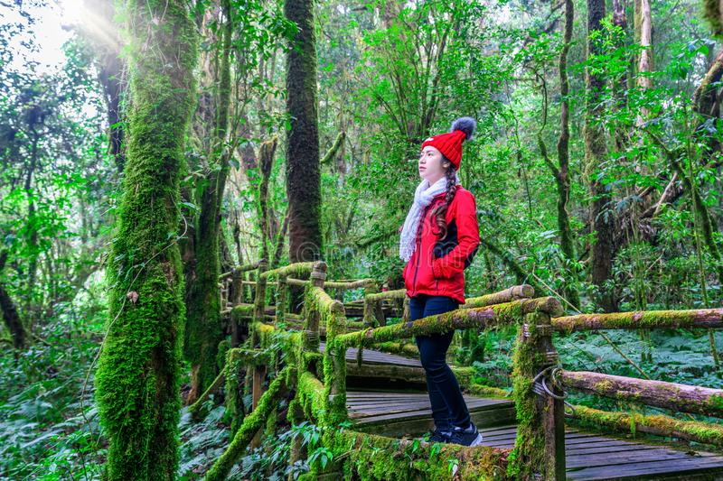 Tourist walking in Ang ka nature trail at Doi Inthanon national park , Chiang mai , Thailand. royalty free stock image