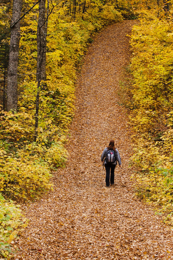 Tourist walking in forest stock photography