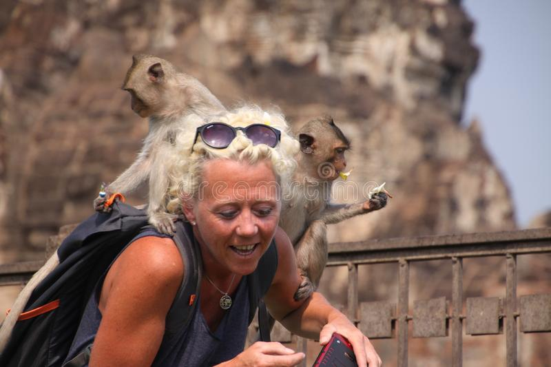 LOPBURI, THAILAND - JANUARY 9 2019: Tourist Woman attacked by monkeys stealing her sunglasses royalty free stock images