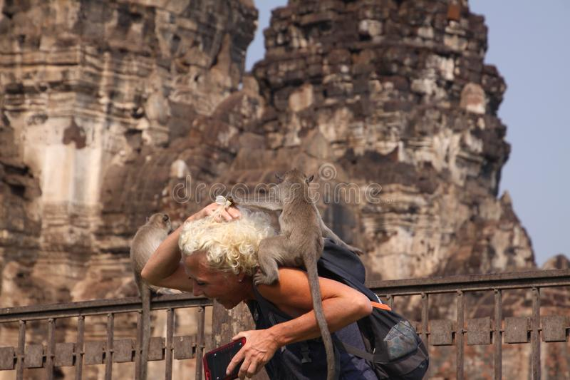 LOPBURI, THAILAND - JANUARY 9 2019: Tourist Woman attacked by monkeys stealing her sunglasses stock photo