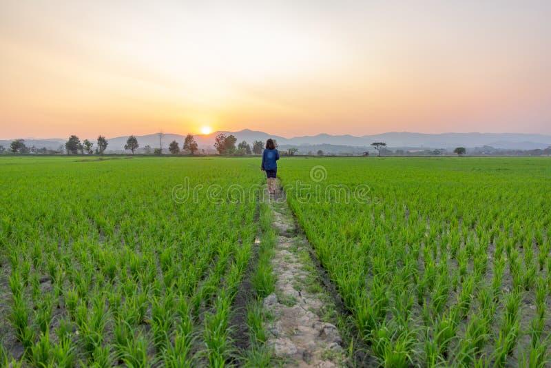 Touriste asiatique de femme regardant le gisement vert de riz au-dessus du coucher du soleil brillant par les montagnes image stock