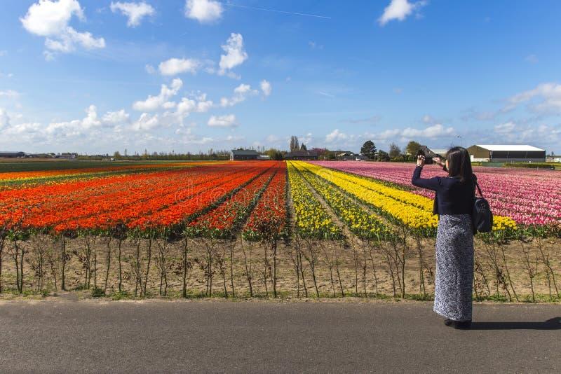 Touriste asiatique de fille à la ferme de tulipes images stock