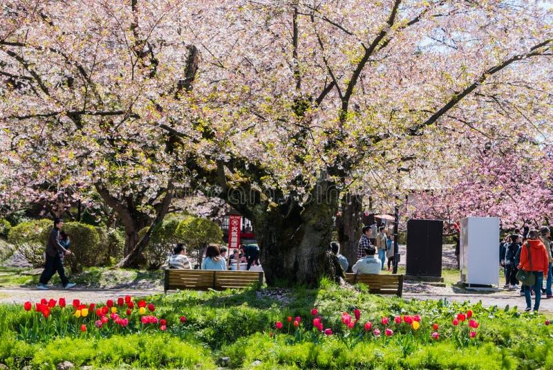 Download Touriste Au Parc De Château De Hirosaki Photo stock éditorial - Image du canal, propriétés: 76088778