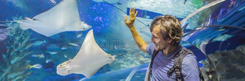 Touriste curieux observant avec l'intérêt sur le requin dans la BANNIÈRE de tunnel d'oceanarium, LONG FORMAT images libres de droits
