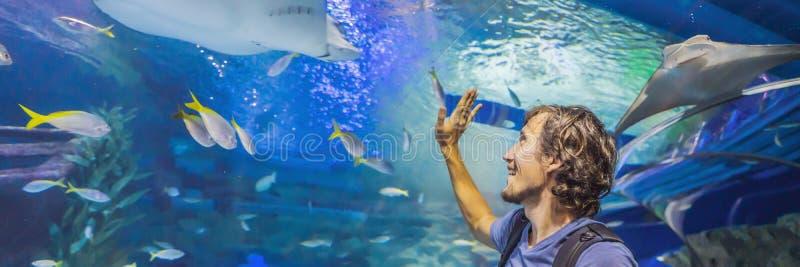 Touriste curieux observant avec l'intérêt sur le requin dans la BANNIÈRE de tunnel d'oceanarium, LONG FORMAT photo stock