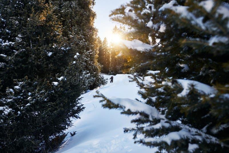 Touriste dans la forêt d'hiver image stock