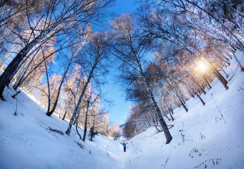 Touriste dans le birchwood d'hiver photos stock