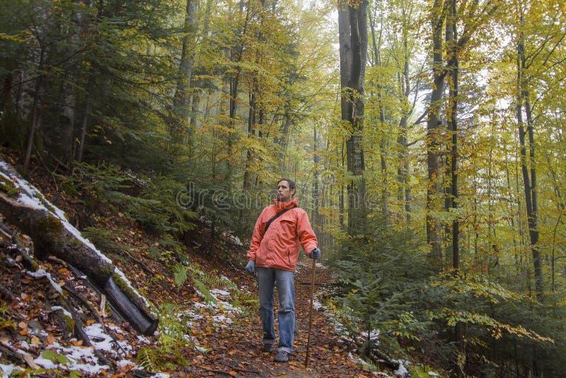 Touriste marchant le long d'une traînée de forêt images stock