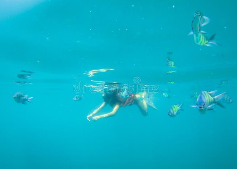 Touriste naviguant au schnorchel avec des poissons de sergent en mer thaïlandaise bleue près de Ko Ngai, Ko Lanta, Thaïlande photo stock