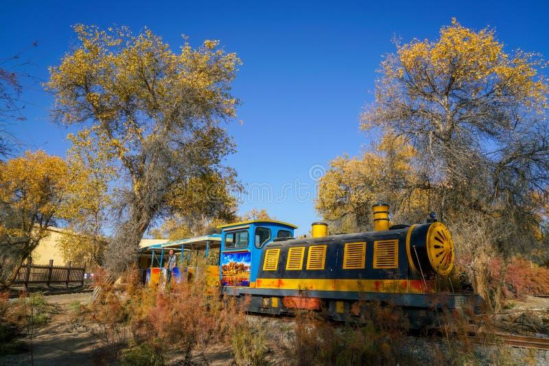 Touriste par le train et le Populus d'or en automne photo libre de droits