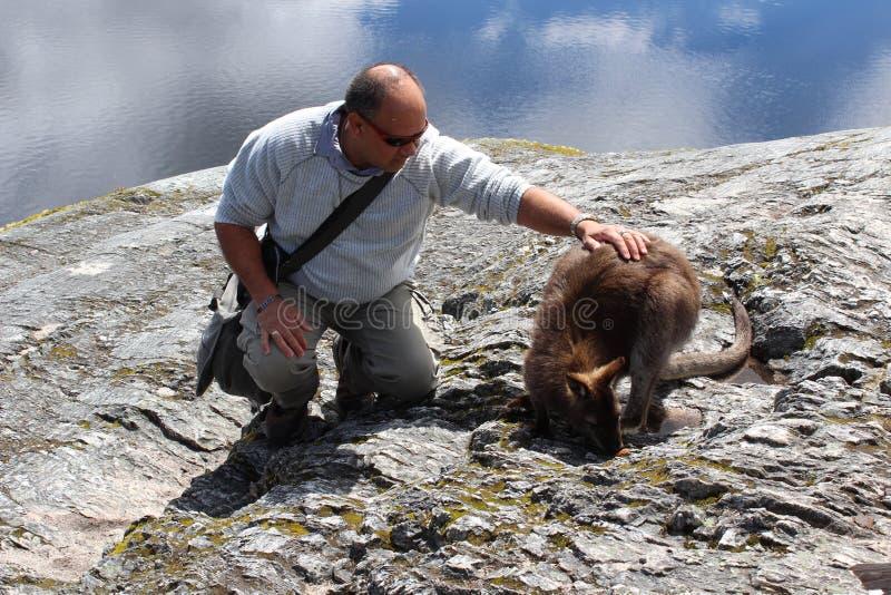 Touriste tapotant un kangourou images stock