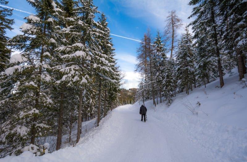 Touriste trimardant avec des raquettes et un panorama de neige en Trentino Alto Adige, Italie photo libre de droits