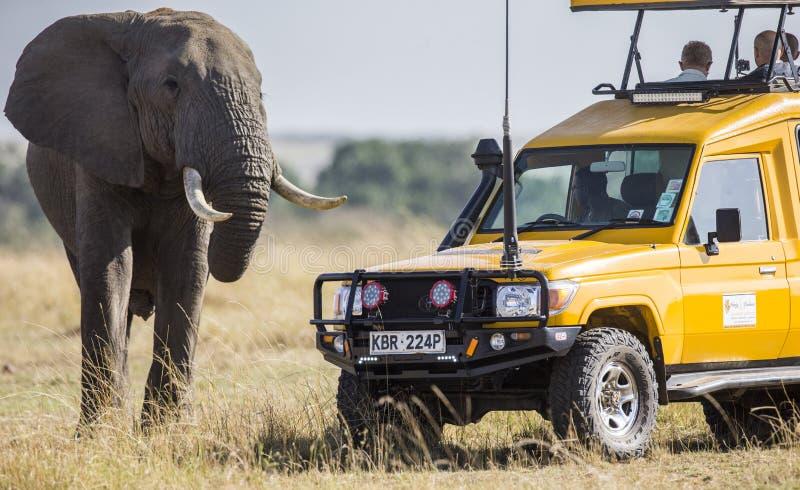 Touristen auf einer Safari in einem speziellen Fahrzeug einen Elefanten aufpassend stockfotos