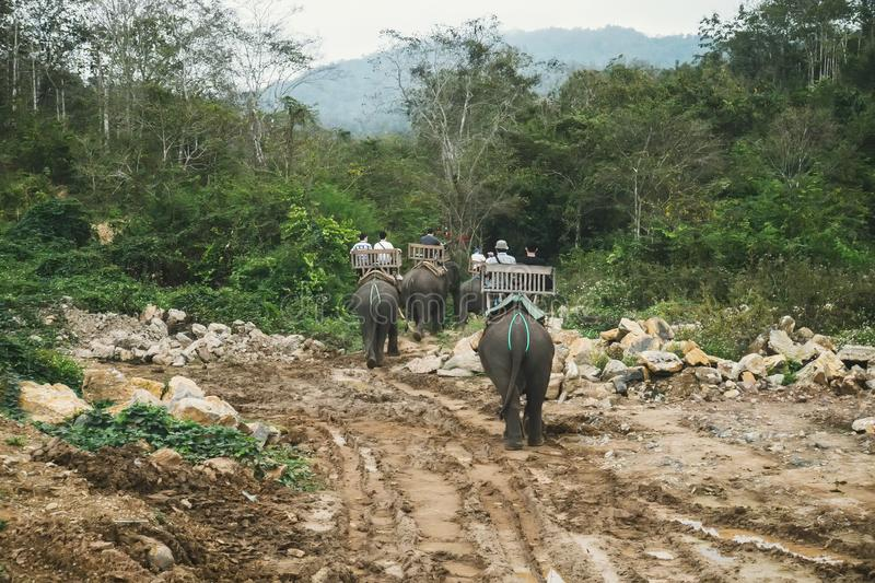 Touristen, die Elefanten im wilden Wald, auf Fluss und am Elefant-Park reiten Leute, die auf den Rückseiten des Elefanten sitzen stockbild