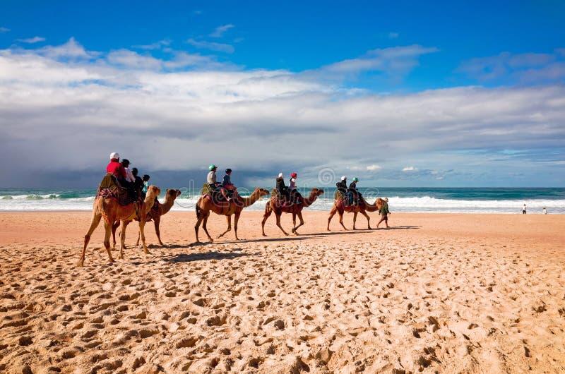 Touristen, die Kamele auf australischen Strand reiten stockfotografie