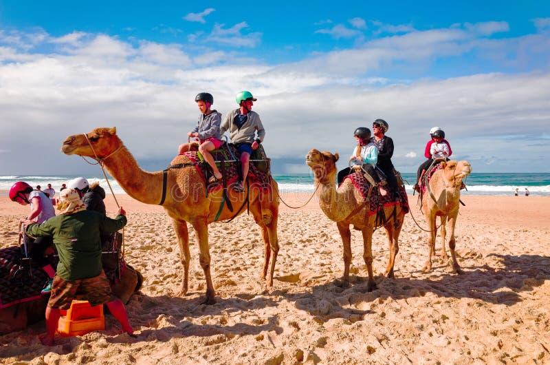 Touristen, die Kamele auf australischen Strand reiten lizenzfreies stockbild
