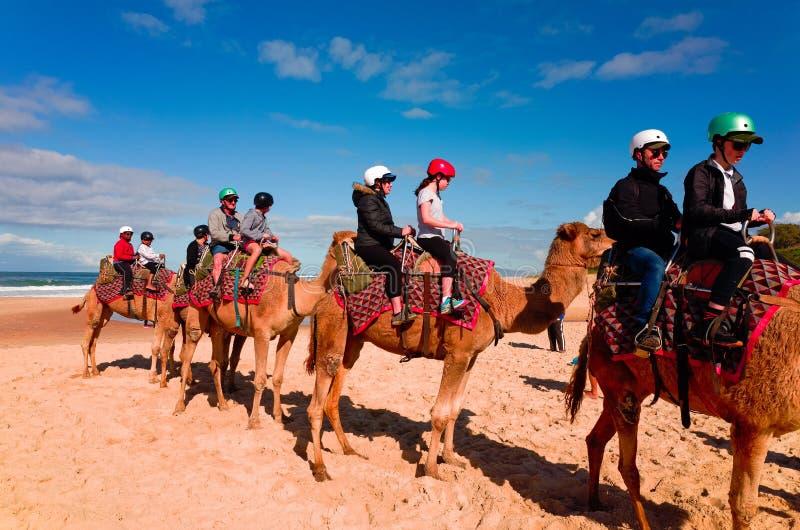 Touristen, die Kamele auf australischen Strand reiten stockfotos