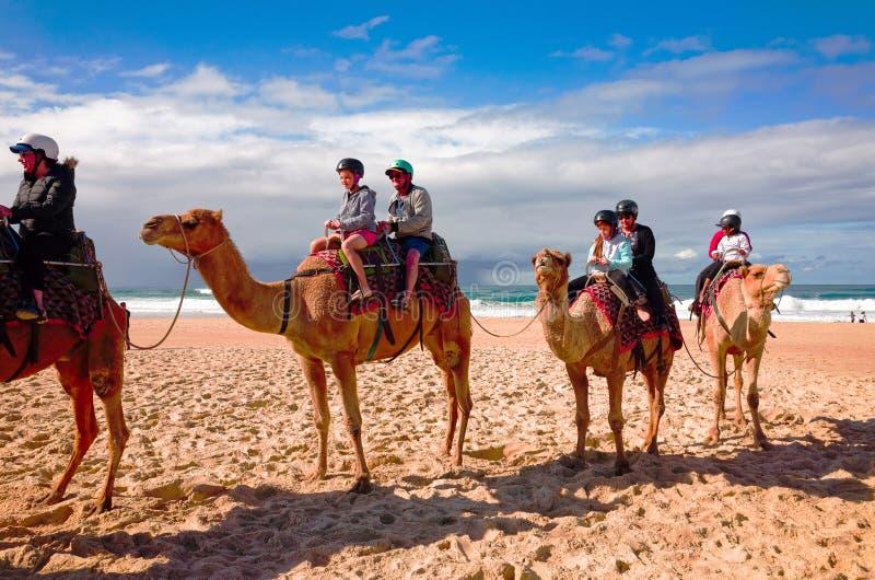 Touristen, die Kamele auf australischen Strand reiten stockfoto