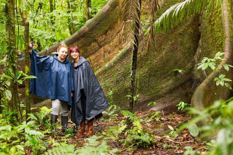Touristen, die nahe bei einem enormen Ceiba-Baum Amazonas sitzen stockfotografie