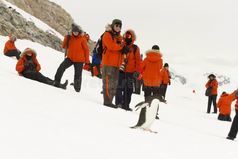 Touristen und gentoo Pinguin stockfotografie