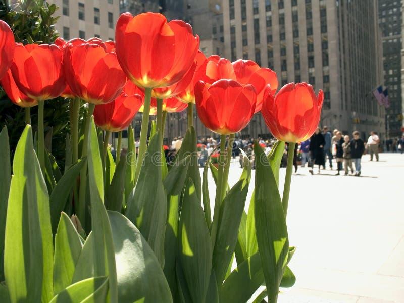 Touristen und Tulpen lizenzfreie stockbilder