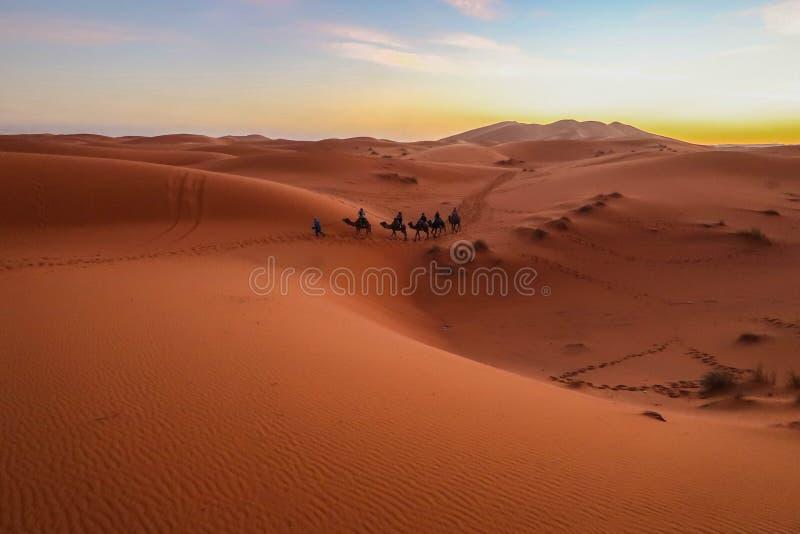 Touristenfahrkamele bilden in der Wüste während des Sonnenuntergangs, Sommer, am Shapotou-Tourismus-Bereich, China aus lizenzfreie stockfotografie