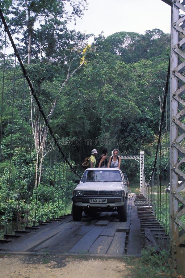 Touristes croisant le pont suspendu dans la forêt tropicale photographie stock libre de droits