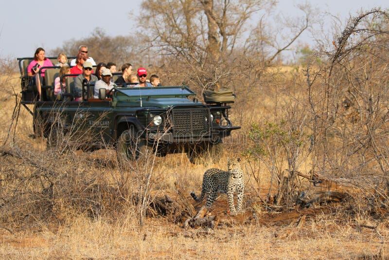 Touristes dans le véhicule de safari observant le léopard africain dans la réserve naturelle privée de Timbavati, Afrique du Sud photographie stock libre de droits