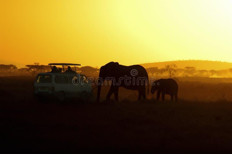 touristes de coucher du soleil d'éléphants de l'Afrique photographie stock libre de droits